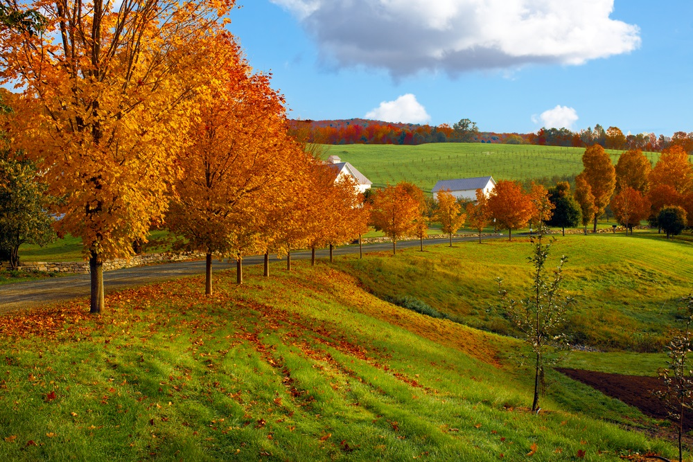 fall_foliage_autumn