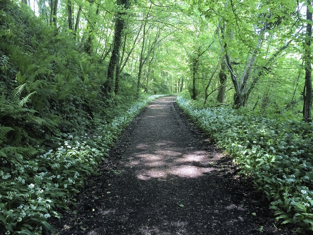 forest of dean (1)