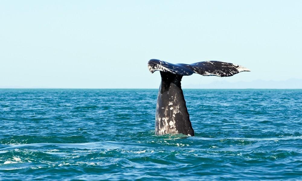 Baja California Whale Watching Experience Tours4fun