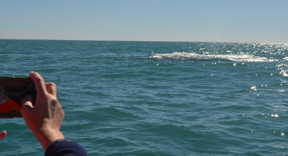 very close whale