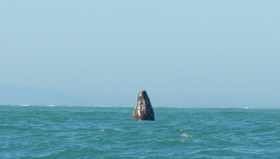 whale_rising