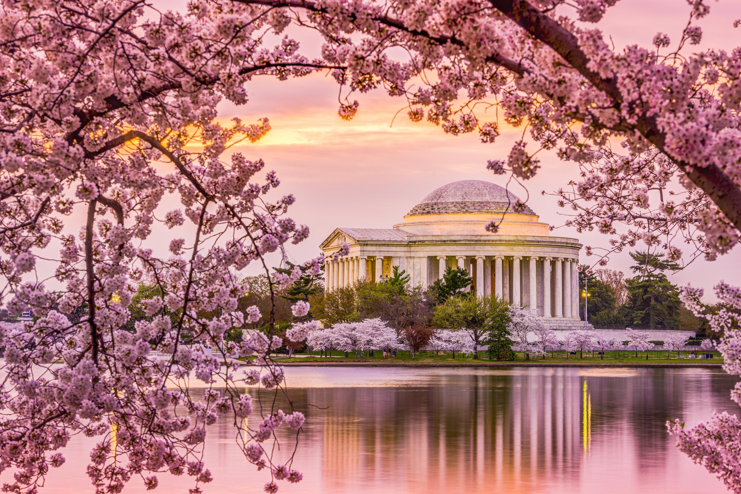 Cherry Blossom Season in Washington D.C. | Tours4fun