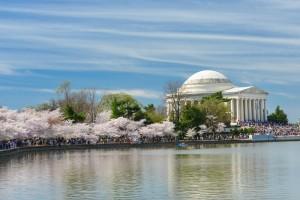 cherry blossom tours in Washington D.C