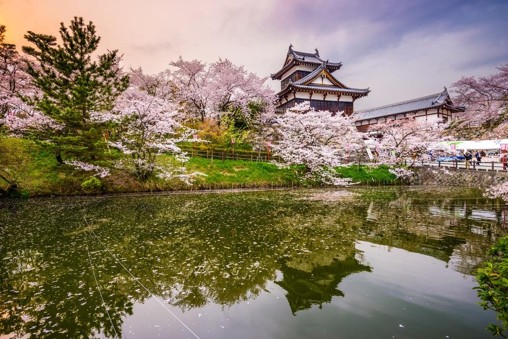 Cherry Blossom Festivals Around The World Tours4fun