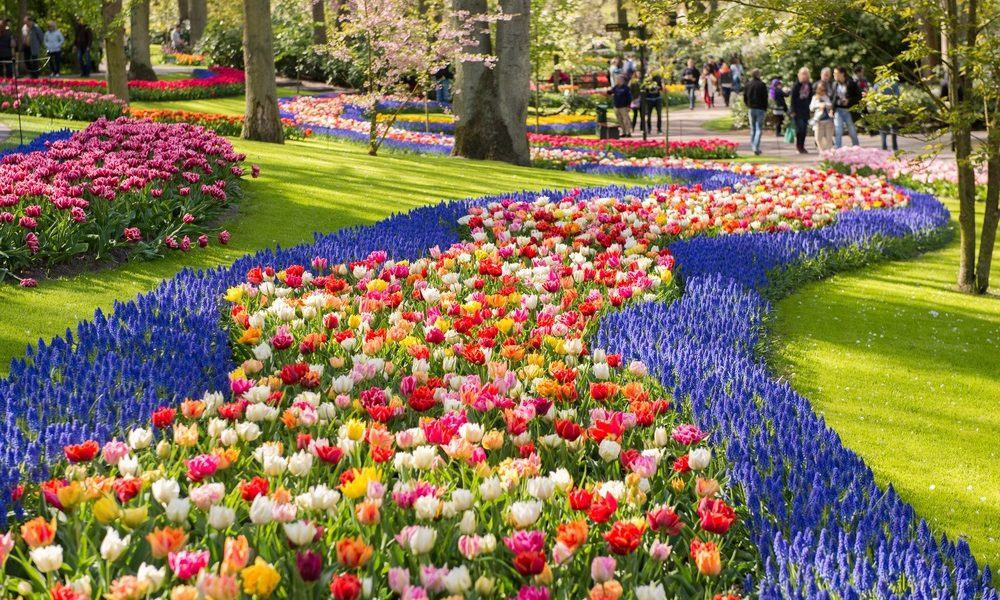 Spring Guide to Tulips in Keukenhof Gardens 2019