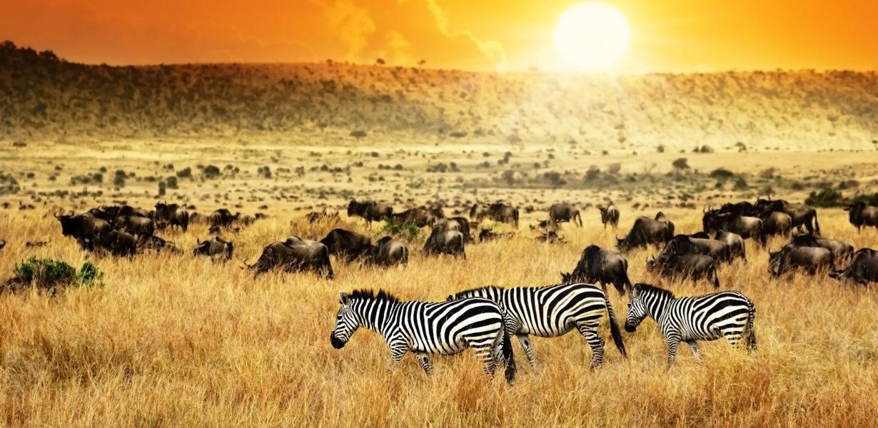 My Safari Adventure to Kenya