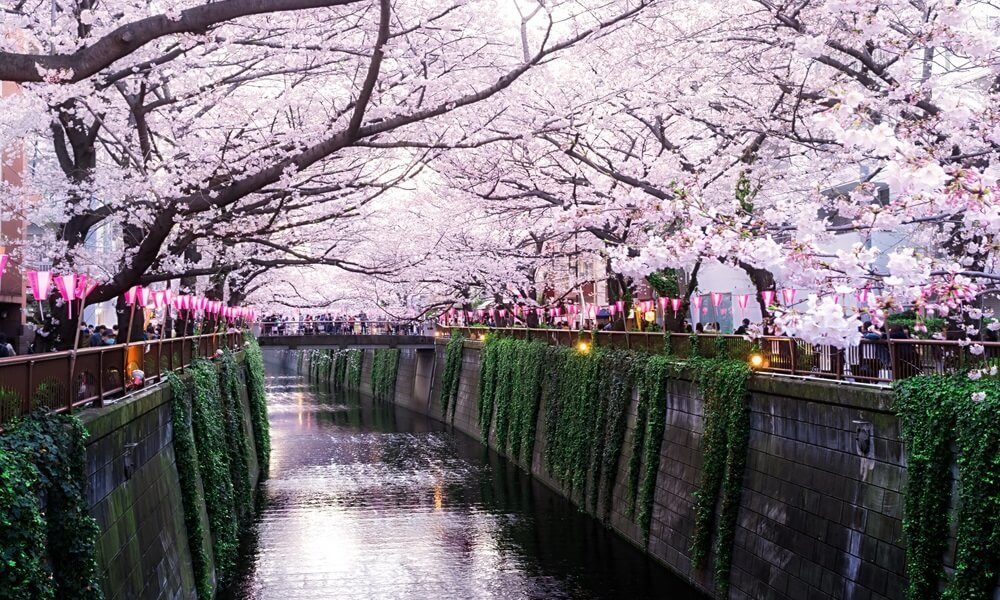 Spring Guide: Cherry Blossoms Blooming Around the World
