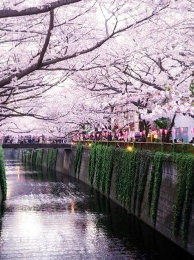 Spring Guide: Washington, D.C. Cherry Blossom Festival
