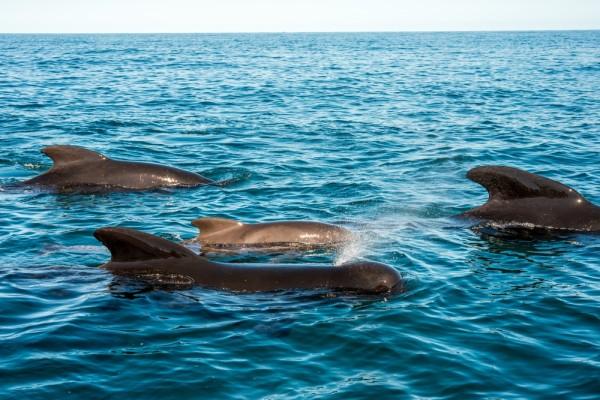 dolphins nova scotia