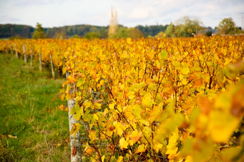 autumn_loire_valley