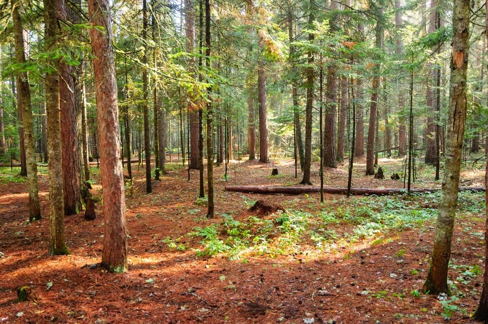 Katahdin_forest_floor