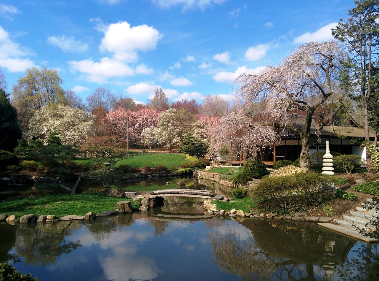 philadelphia_cherry_blossom_festival