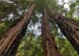 Muir Woods & Sausalito With Extranomical