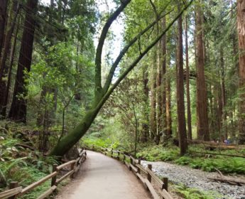Muir Woods Extranomical Tours