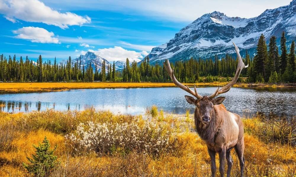 When is the Best Time to Visit Canada?