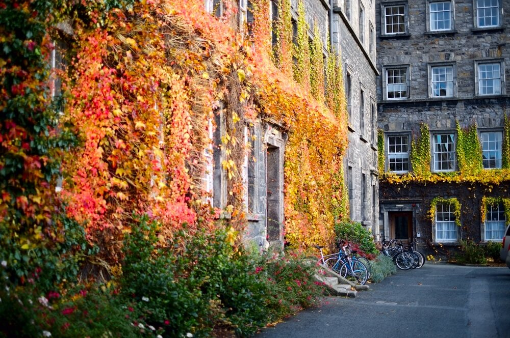 Autumn Leaves on the Trinity College