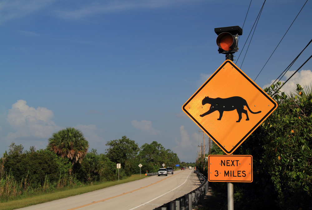 Everglades Fakahatchee Strand panther sign